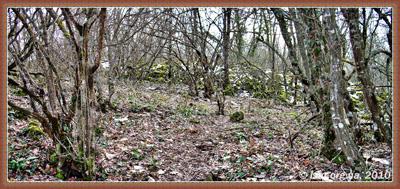 Стена в лесу