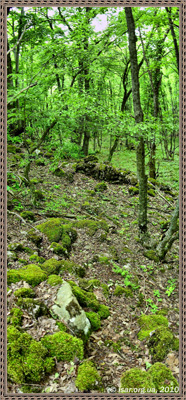 Постройки в лесу